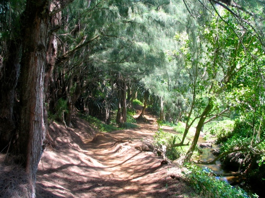 This quiet trail in Kauai reminds me to love the journey