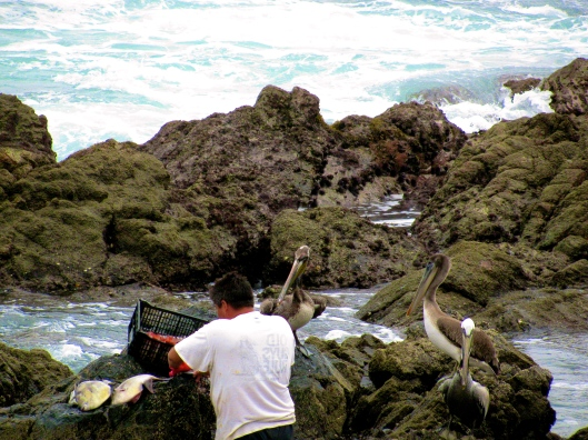 This fisherman is cleaning his catch.  The birds wait for a share.  He doesn't disappoint them