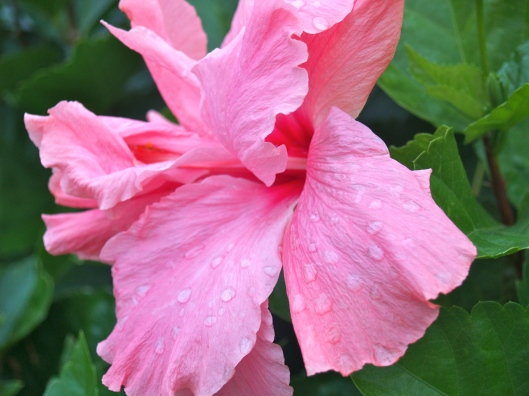 Rain in the tropics