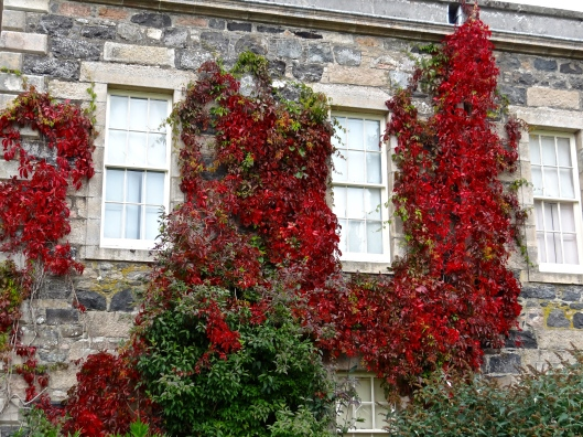 Virginia Creeper on Haddo House