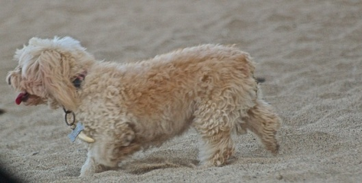 This sand is so going to get in my fur
