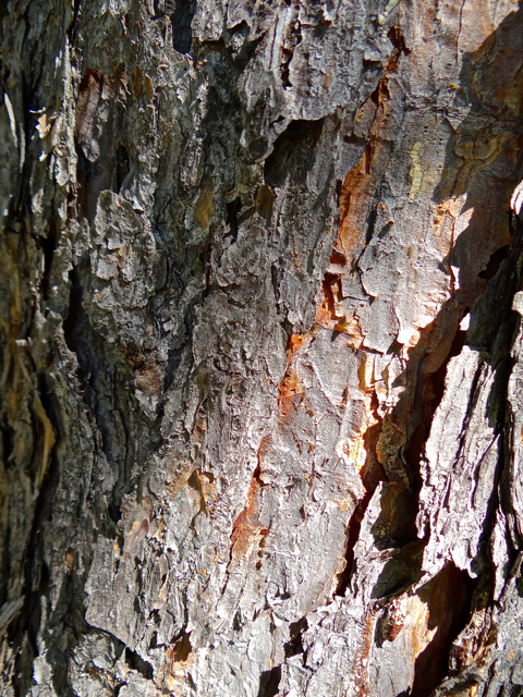 Hey Woody, this is tree bark  - give it a try.