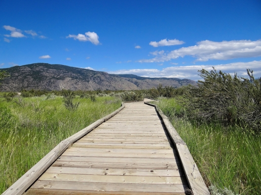 The society has built a wonderful boardwalk to protect the fragile biotic crust