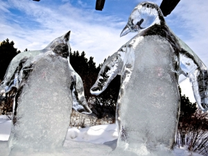 penguins close up